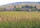 Meursault