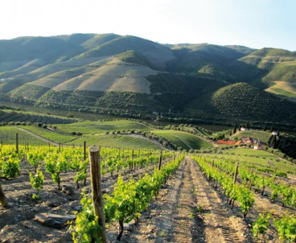 Quinta de Roriz in the Douro Valley