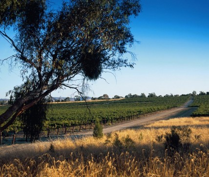 Penfolds_Kalimna_Vineyard_Barossa.