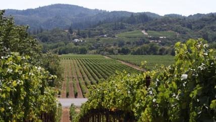 vineyard, france,