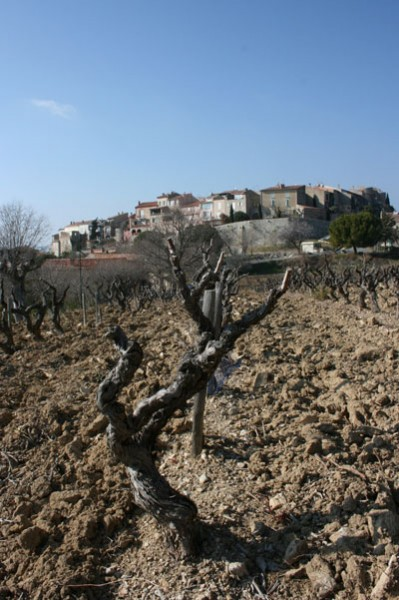 vines, wine, jefford, bandol,