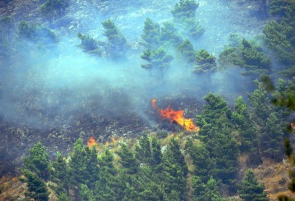 Fires in the Zingaro National Park in Sicily