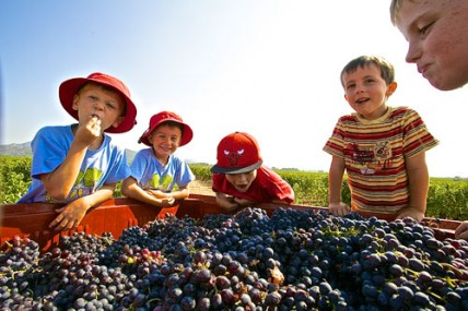 Children eating grapes