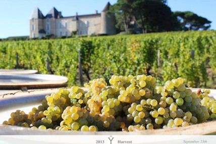 Bordeaux 2013: Estates upbeat as dry whites harvest begins