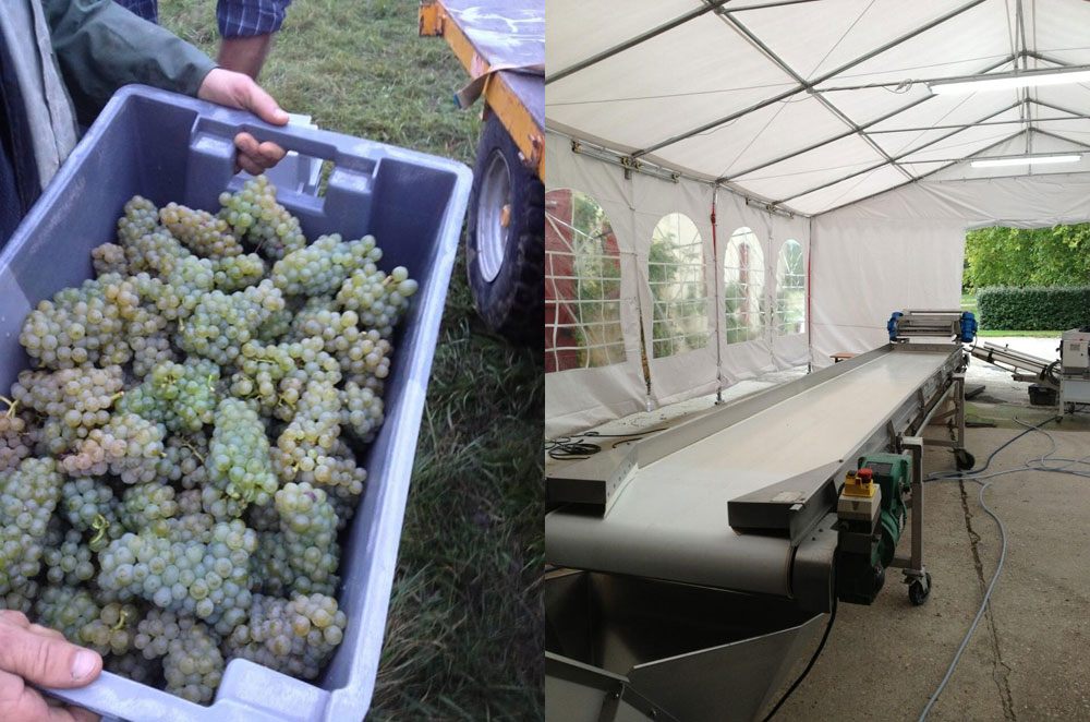 2013 harvests around the world ajax galleries for Chateau olivier