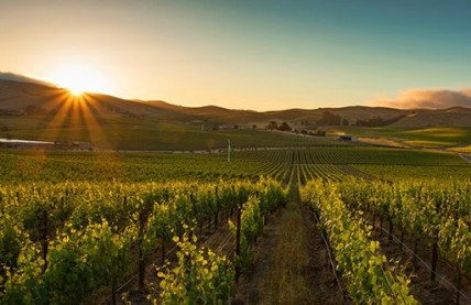 New Zinfandel film debuts in Napa