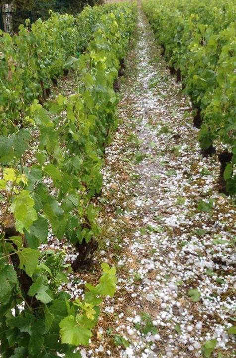 http://decanter.media.ipcdigital.co.uk/11150/0000087a1/ffdc/Hail-in-Volnay-June-2014.jpg